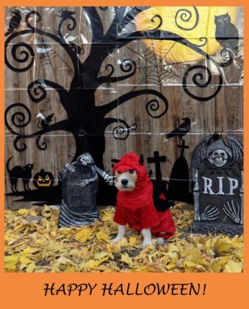 Halloween2013New