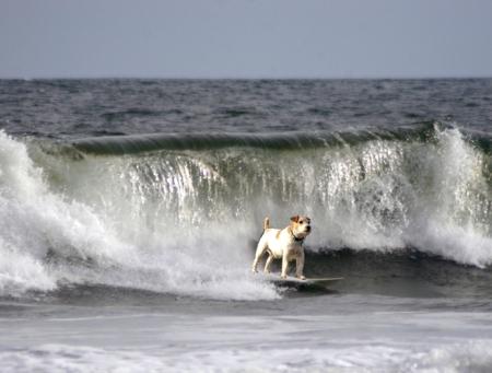 SawyerSurfing