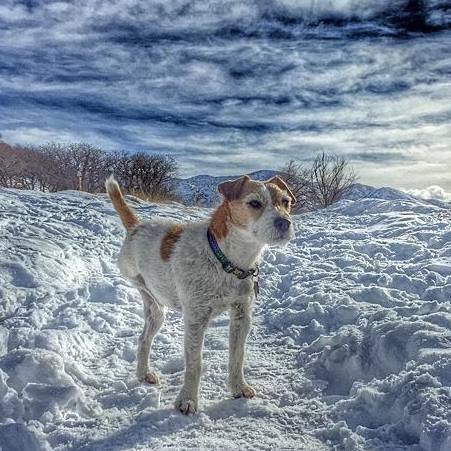 sawyer_snow